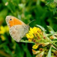 cкоро лето, бабочки...31 :: Александр Прокудин