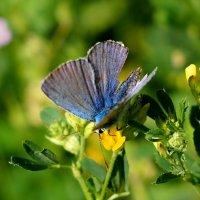 cкоро лето, бабочки...37 :: Александр Прокудин