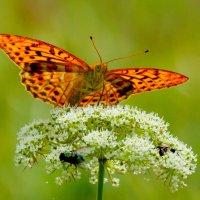 cкоро лето, бабочки...40 :: Александр Прокудин