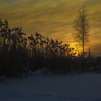 фото 1 или 2 :: Albina Lukyanchenko
