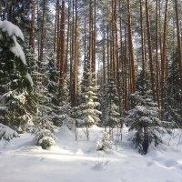 Март пришёл, зима не сдаётся) :: Татьяна