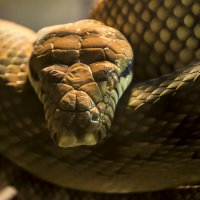 змея :: Наталья Егорова