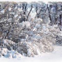 Снежная нежность :: Денис Масленников