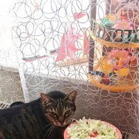 Поздравления от кота :: п.с.ю