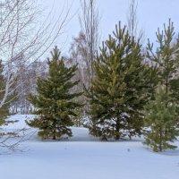Зимний лес :: Владимир Зыбин