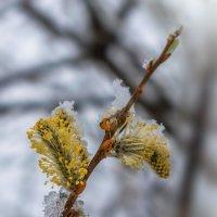 Майский снег :: Анатолий Володин