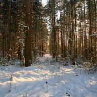 Загадочные коридоры снежного леса! :: Mila .