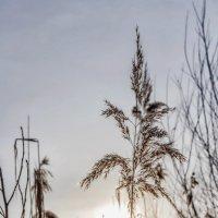 Рассвет в марте.. :: Юрий Стародубцев