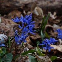 Весна от сегодня, 13 03 2021г. :: Вен Гъновски