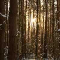 Чары лесной красоты! :: Mila .