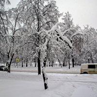 Снежная зима :: Анатолий Цыганок