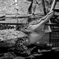 Жизнь в аквариуме... :: Татьяна Н.