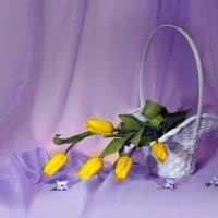 Тюльпановое настроение :: Olenka
