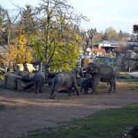 Из жизни слонов :: Ольга