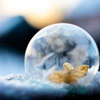 Цветок в мыльном пузыре :: Роман никандров