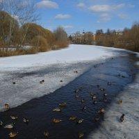 Великие Луки. Река Ловать... :: Владимир Павлов