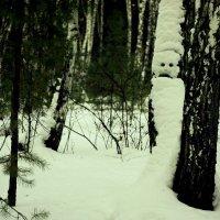 Лесные тайны :: Сергей Царёв