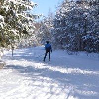 Лыжник. :: zoja