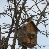 Весна..Птицы прилетают.. :: Зинаида