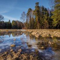 Весна. :: Олег Бабурин