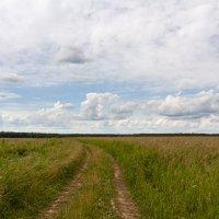 Полевая дорога. :: Alexandr Gunin