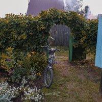 В саду :: Андрей Кобриков