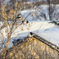 ...а мне летать охота! :: Андрей Щетинин