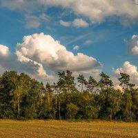 Облака и сосны :: Николай Гирш
