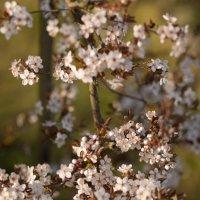 весна :: vladimir