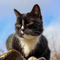 Кошка :: Сергей Зайцев