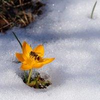 Весна ! ;) :: Вен Гъновски