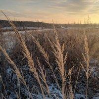 Сквозь сухие травы :: Марина Птичка
