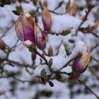 Снег и цвет :: Вальтер Дюк