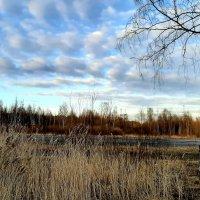 Вечернее небо :: Елена Павлова (Смолова)
