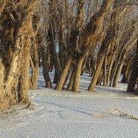 Там снегопад, там леший бродит :: Петр Фролов