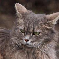 Кошка Мышка :: Светлана Попова