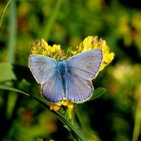 опять про бабочек  3 :: Александр Прокудин