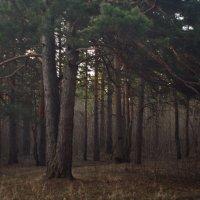 В лесу пригородском в апреле. :: Михаил Полыгалов