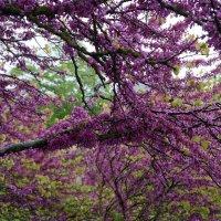 Торжество весны... :: Алёна Савина