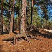 Про деревья :: Liliya Kharlamova