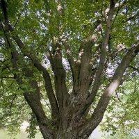 Рука дерева :: Андрий Майковский