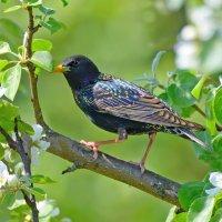 Весенние птицы :: Влад