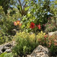 цветы в горах :: Александр Деревяшкин