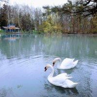 Лебеди :: Dimos Izgor
