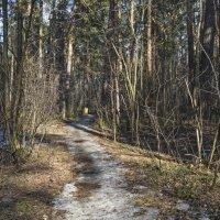 Тропинка в парке.(Начало апреля) :: Сергей Фомичев