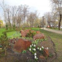В весеннем парке... :: Тамара Бедай