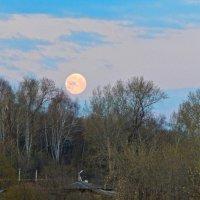 Рассветная Луна! :: Елена Хайдукова  ( Elena Fly )