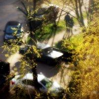 Весна. :: павел Труханов