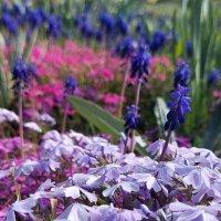 весна в Крыму :: Евгений Евгений