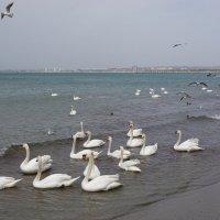 Птичий рай :: Ольга